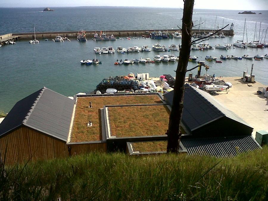 H5 végétalisation toiture plate fin des travaux
