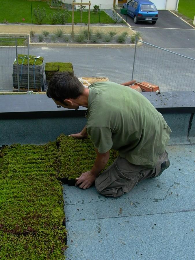 Toiture végétalisée - végétalisation pendant travaux
