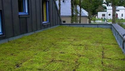 M4 toiture végétalisée extensive fin des travaux