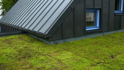 M7 toiture plate végétalisée extensive pente minimum 5% fin des travaux